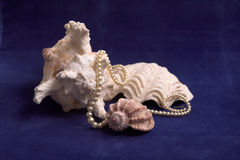Shelles con las perlas foto de archivo libre de regalías
