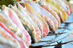 Shelles de la concha Fotografía de archivo