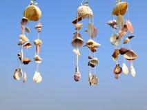 Shelles de la cortina Fotografía de archivo libre de regalías