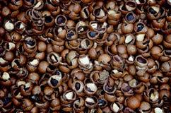 Shelles de la tuerca de macadamia imagen de archivo