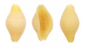 Shelles de las pastas de Conchiglie Fotos de archivo