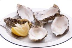 Shelles de ostra vacíos Imagenes de archivo