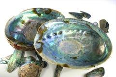Shelles de Paua Fotografía de archivo