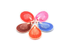 Shelles decorativos coloridos, dimensión de una variable de una estrella Imagen de archivo
