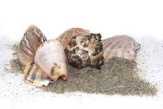 Shelles del arena de mar Fotos de archivo