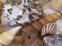 Shelles del caracol Foto de archivo libre de regalías