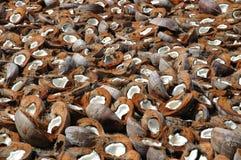 Shelles del coco Imagen de archivo libre de regalías