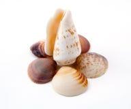 Shelles del mar Foto de archivo