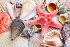 Shelles del mar Fotografía de archivo libre de regalías