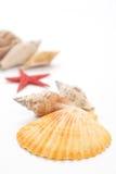 Shelles del mar Imagenes de archivo