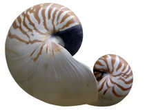 Shelles del mar Imágenes de archivo libres de regalías