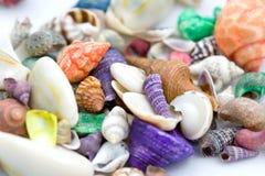 Shelles del mar. fotos de archivo libres de regalías