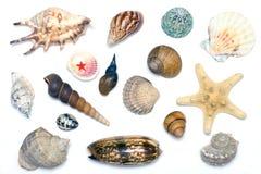 Shelles del mar Imagen de archivo libre de regalías