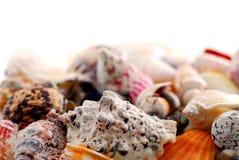 Shelles del mar Fotos de archivo
