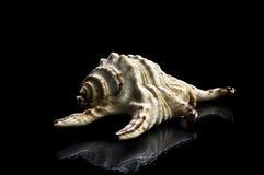 Shelles del mar aislados en blanco Imagen de archivo
