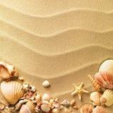 Shelles del mar con la arena Fotos de archivo libres de regalías