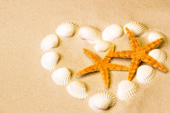 Shelles del mar con la arena como fondo Imagen de archivo