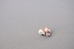 Shelles del mar con la arena como fondo Fotos de archivo libres de regalías