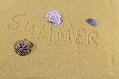 Shelles del mar con la arena como fondo Fotografía de archivo libre de regalías