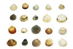 Shelles del mar, conjunto grande Fotografía de archivo libre de regalías