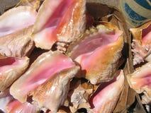 Shelles del mar de Bahamas Fotografía de archivo