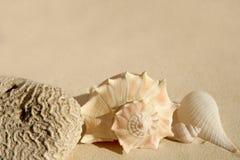 Shelles del mar de la arena de la playa y corazón del Caribe del cerebro Imágenes de archivo libres de regalías