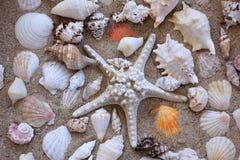 Shelles del mar en arena Fotografía de archivo libre de regalías
