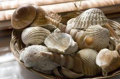 Shelles del mar en cuarto de baño fotografía de archivo