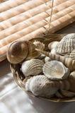 Shelles del mar en cuarto de baño imagenes de archivo