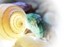 Shelles del mar en el fondo blanco Imágenes de archivo libres de regalías