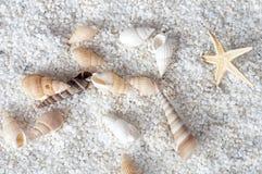Shelles del mar en la arena Fotos de archivo libres de regalías