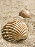 Shelles del mar en la arena Fotografía de archivo