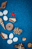 Shelles del mar en la arena Foto de archivo libre de regalías