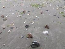 Shelles del mar en la arena Imagen de archivo
