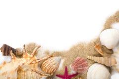 Shelles del mar en la arena aislada Foto de archivo
