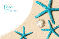Shelles del mar en la arena Fondo de la playa del verano Visión superior Fotos de archivo