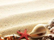 Shelles del mar en la frontera de la arena Imágenes de archivo libres de regalías