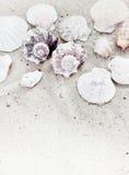 Shelles del mar en la frontera de la vertical de la arena Imágenes de archivo libres de regalías