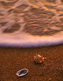 Shelles del mar en la playa arenosa 1 Imagenes de archivo