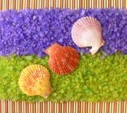 Shelles del mar en la sal del mar Imagen de archivo