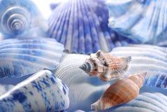 Shelles del mar en primer Fotos de archivo