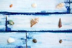 Shelles del mar en un fondo de madera Imagen de archivo libre de regalías