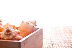 Shelles del mar en un rectángulo de madera de pino Foto de archivo libre de regalías