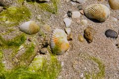 Shelles del mar fotografía de archivo