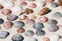 Shelles del mejillón foto de archivo