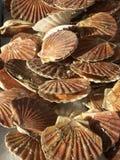 Shelles del St. Jacques Fotos de archivo libres de regalías