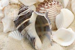 Shelles en arena imagenes de archivo