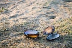 Shelles en la arena Imágenes de archivo libres de regalías