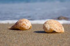 Shelles en la arena Imagenes de archivo