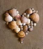 Shelles en la arena foto de archivo libre de regalías
